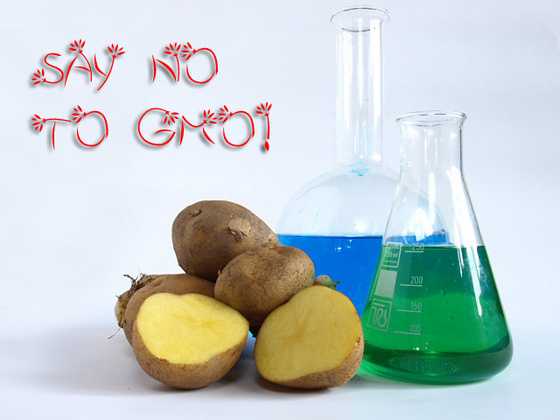 Pacsker: Say no to GMO!