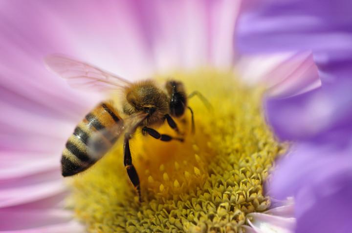 Méhek színek - 3