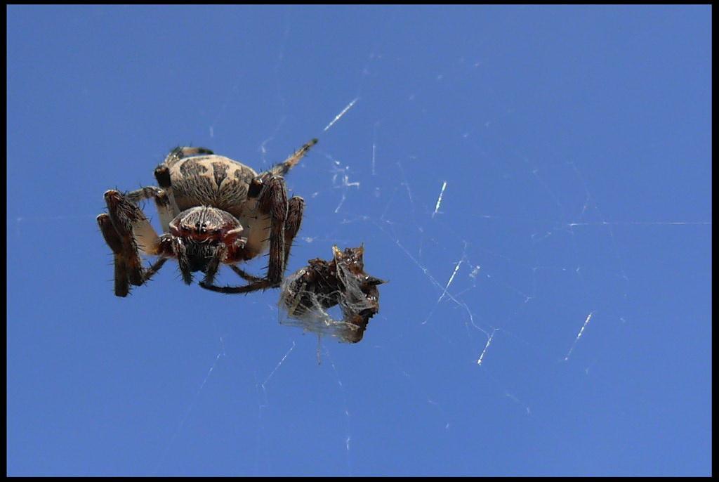pók és tízórai