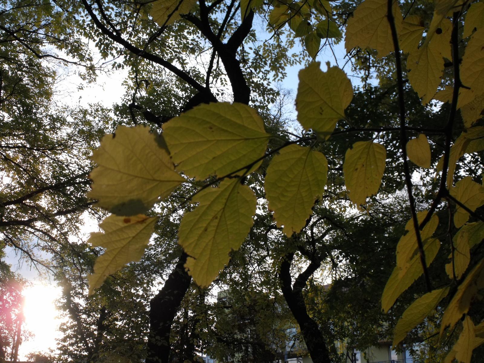 Változatok őszi falevélre 2.