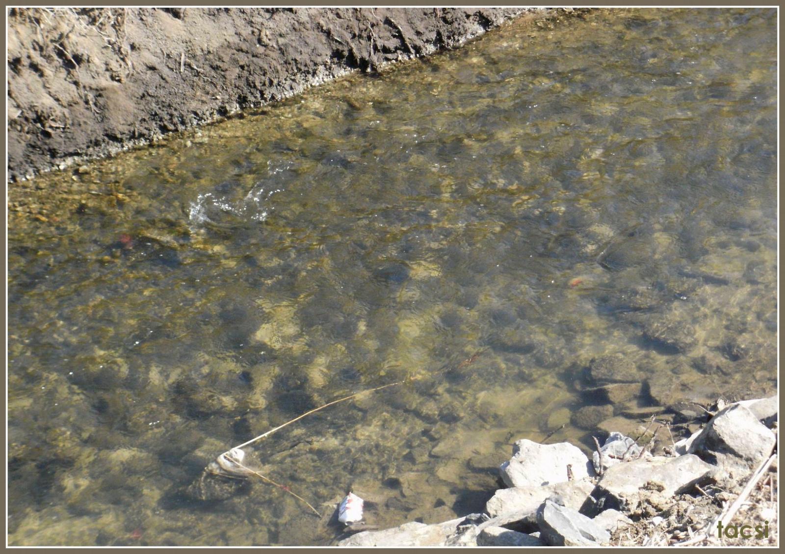 22. Ikva a Rák patak vízével bővülve