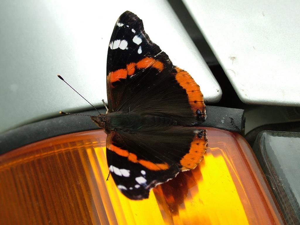 Pillangóslámpa