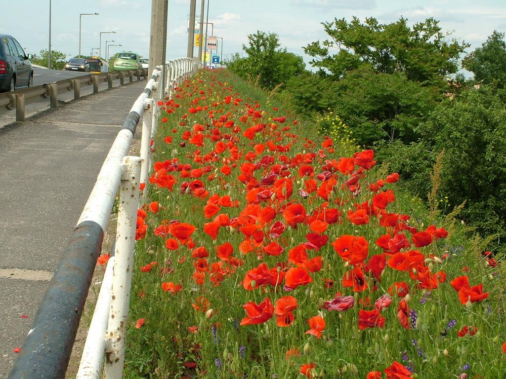 1000virág