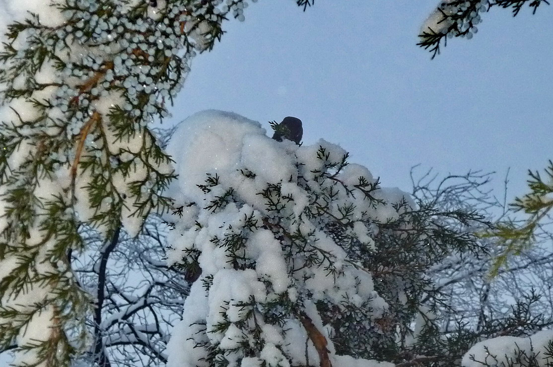Hideg téli délután
